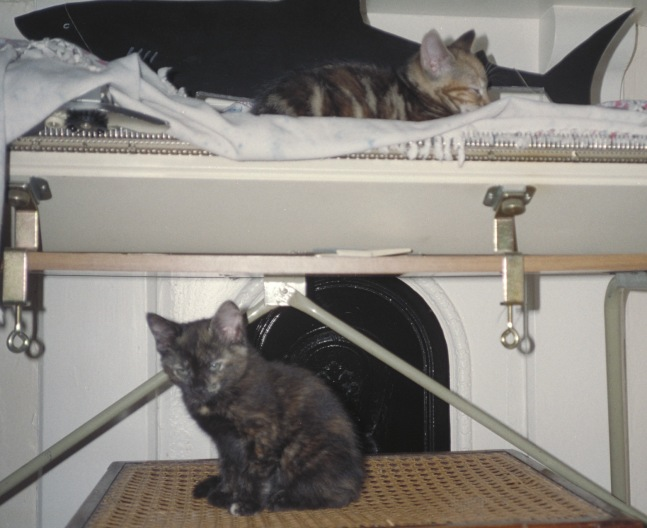 Monet and Poe as kittens, sitting on old knitting machine