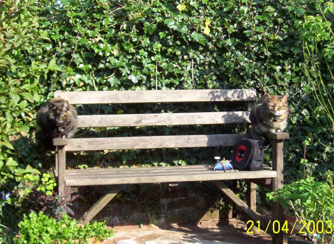 Poe and Monet on bench