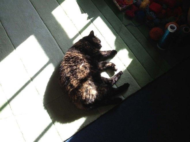 Poe in woolly room sunlight