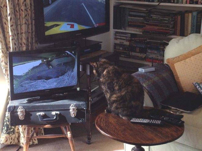 Poe watching Bird tv