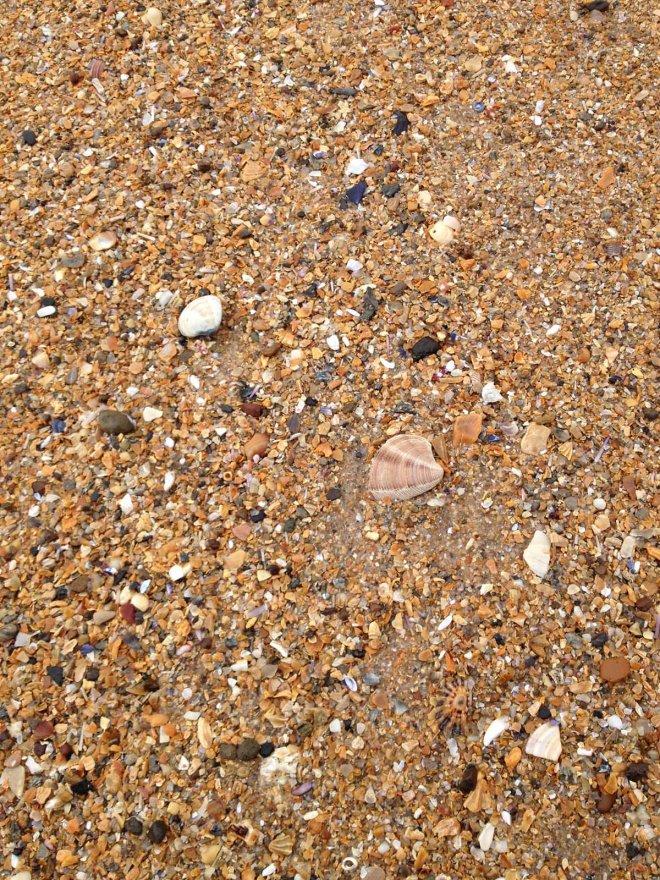 shells and sand