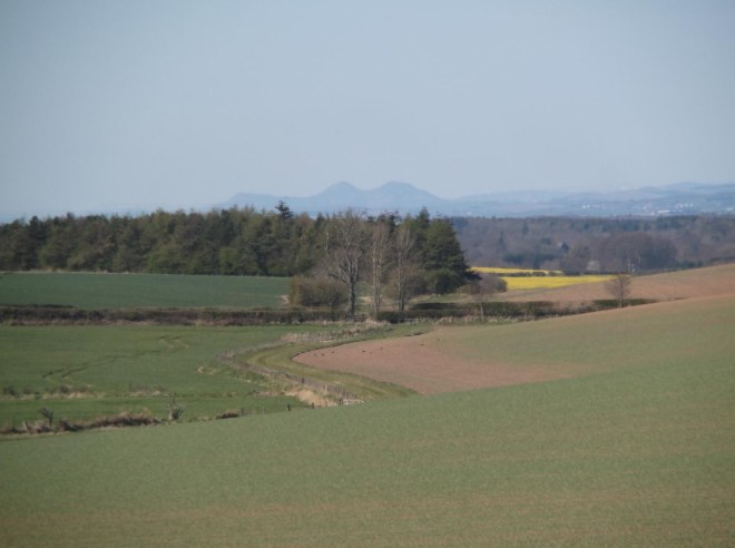 looking over to Eildons