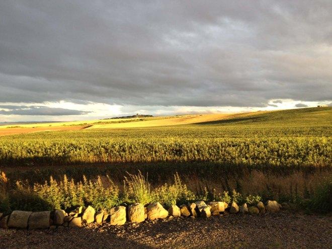 extraordinary golden evening light on field