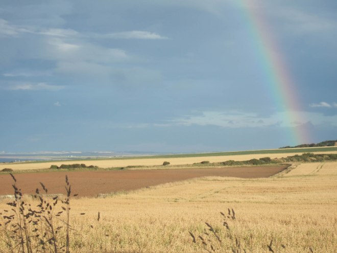 golden fields and rainbow