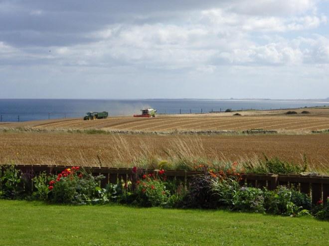 Harvesting golden fields
