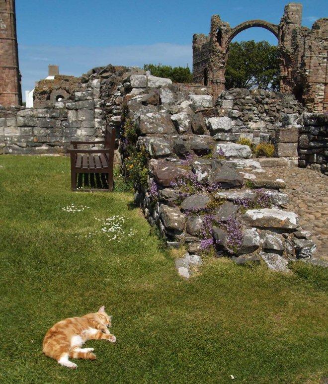 cat amid ruins
