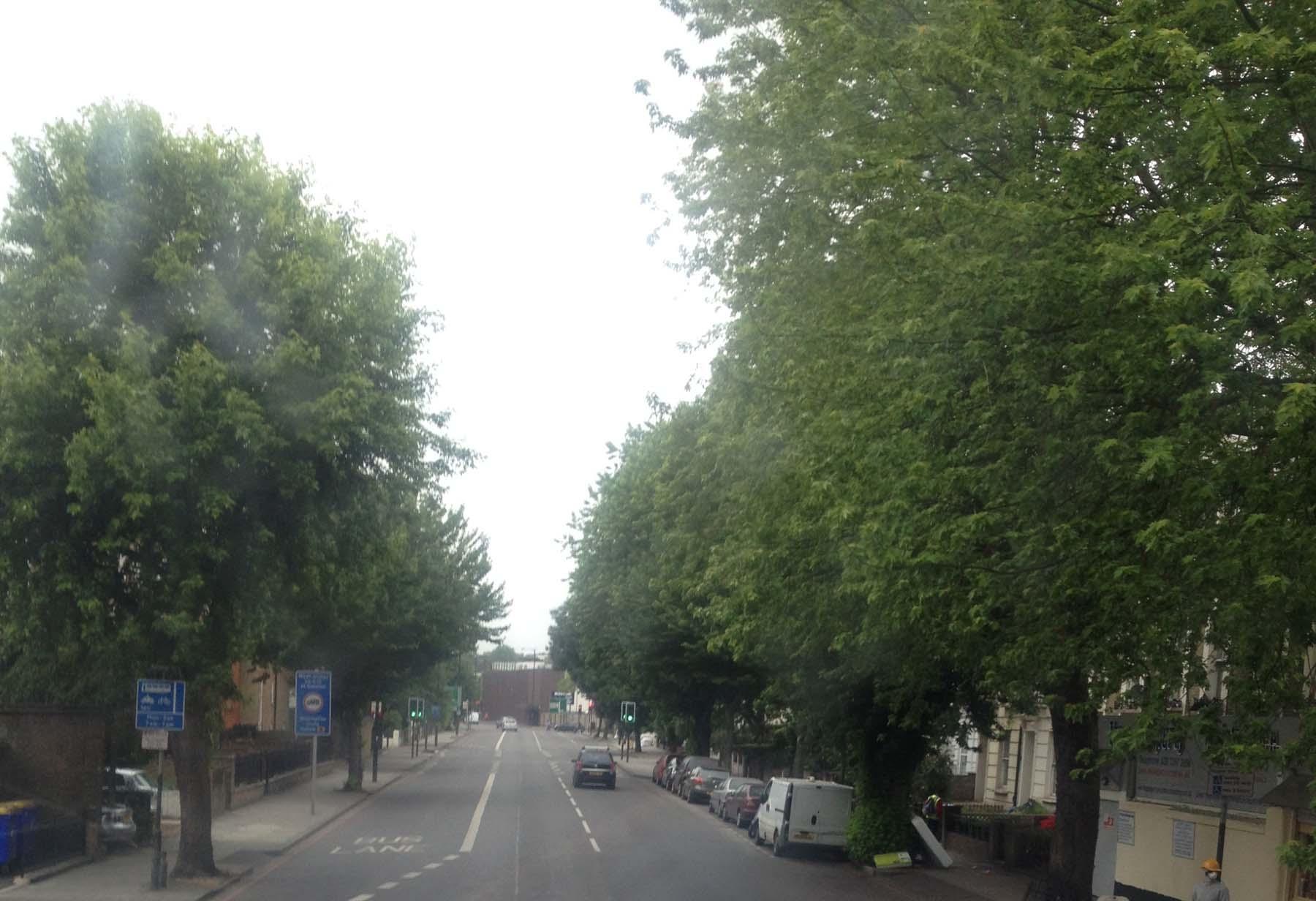 green London trees