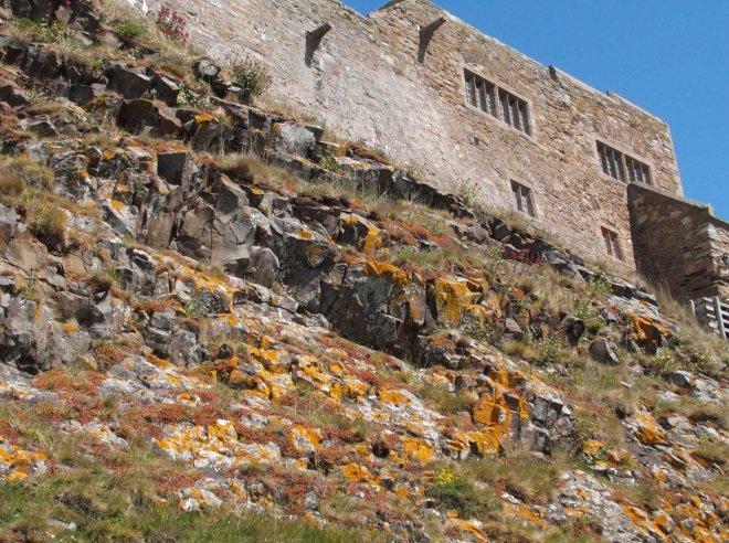 lichen under castle