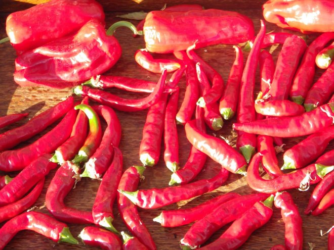 chillis from the garden