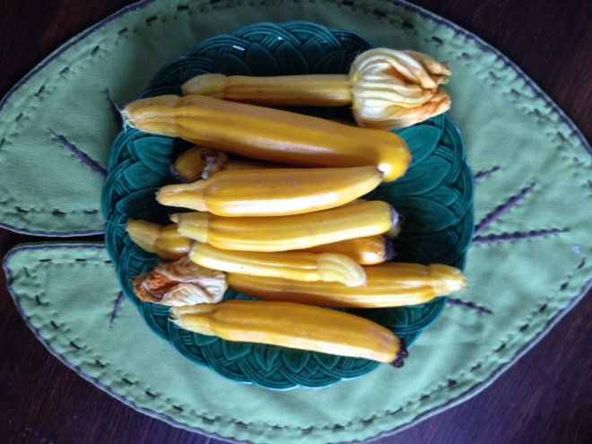 yellow courgettes from the garden