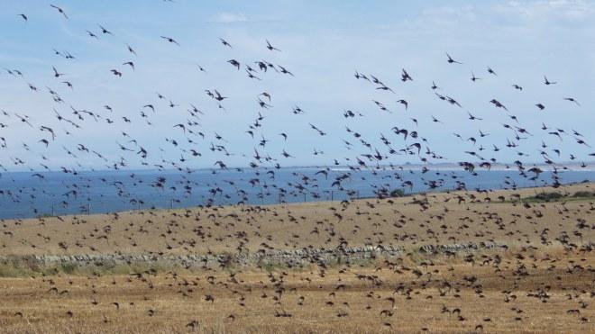 Birds against sea