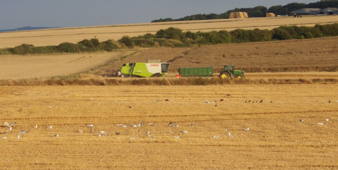 Birds and harvester