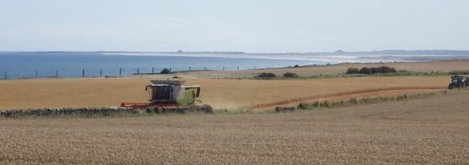 Harvesting against sea