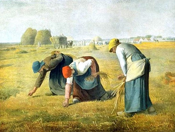 Millais Gleaners