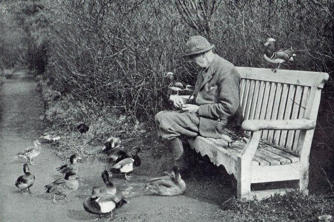 Edward Grey 1931