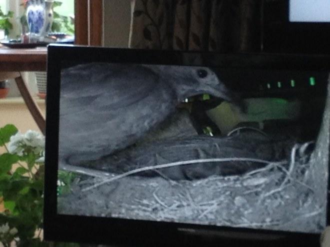 bird tv