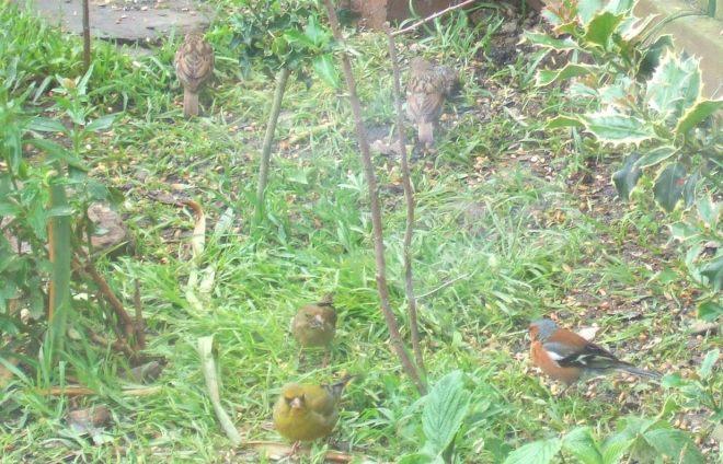 birds under feeder
