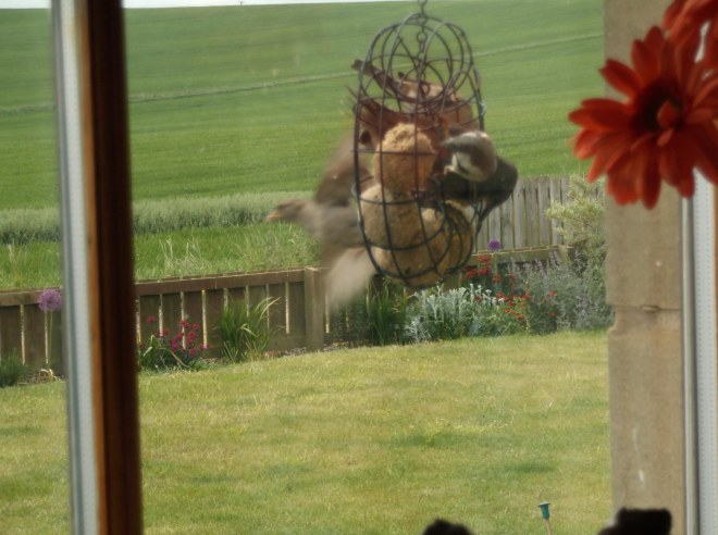 several birds on feeder