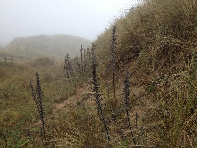 strange blackened plants in the mist