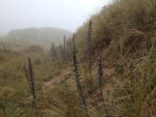 strange blackened plants in the mist