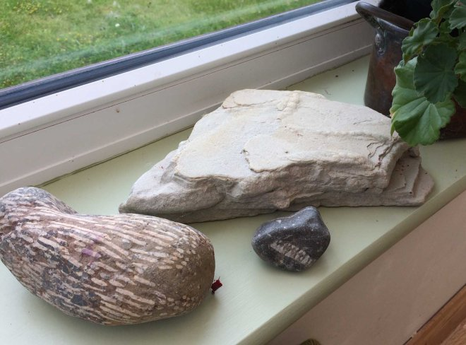fossils in the conservatory