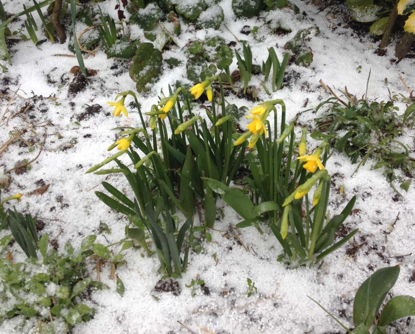 Spring is in the air – sort of!
