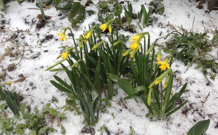 Spring is in the air – sortof!