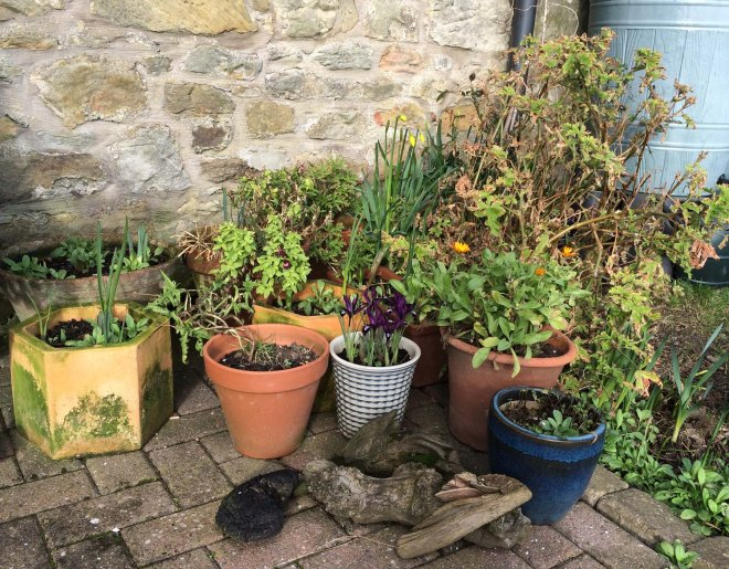 Flower pots on terrace