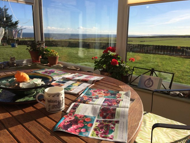 Seed catalogues come out