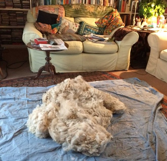 alpaca on sitting room floor