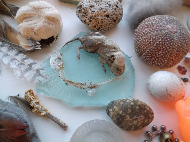 desiccated mouse and other treasures