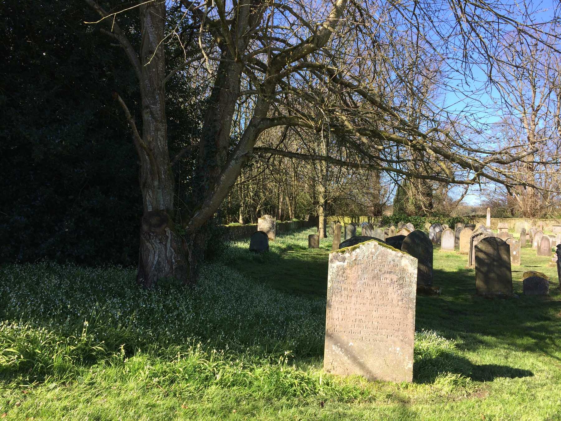 gravestones amid ramsons