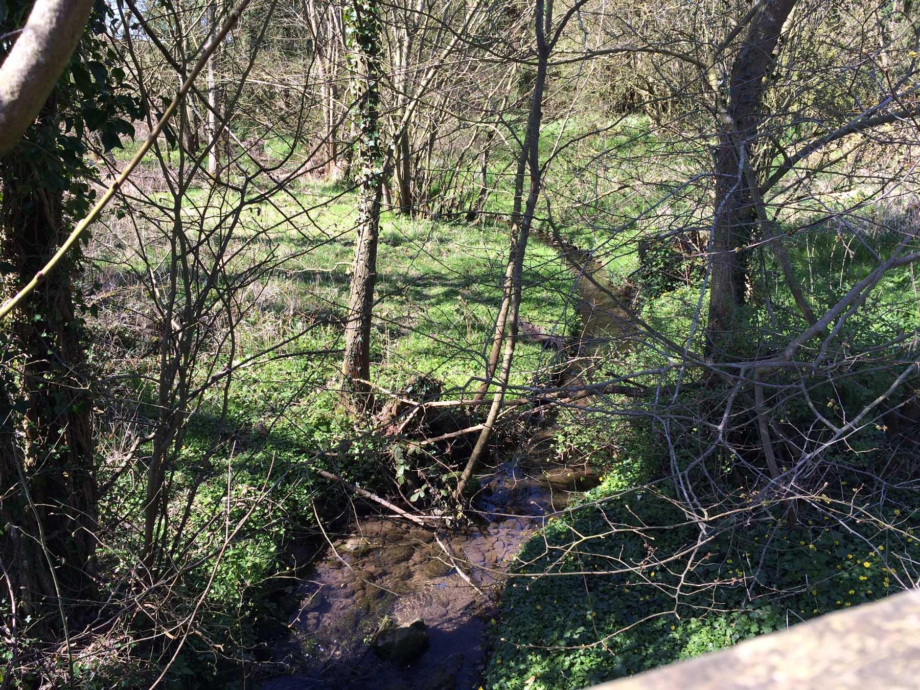 walk along little stream