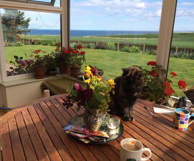 conservatory geraniums