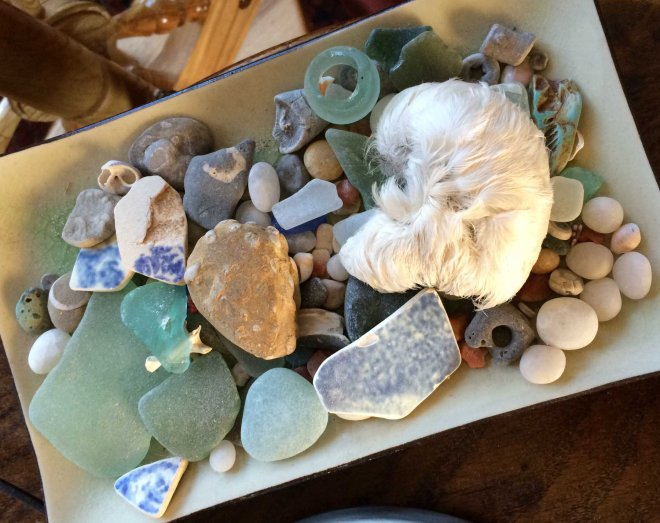 Seaview treasures including gull chick