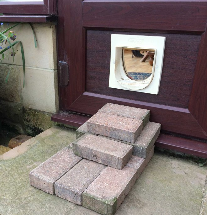 steps to catflap