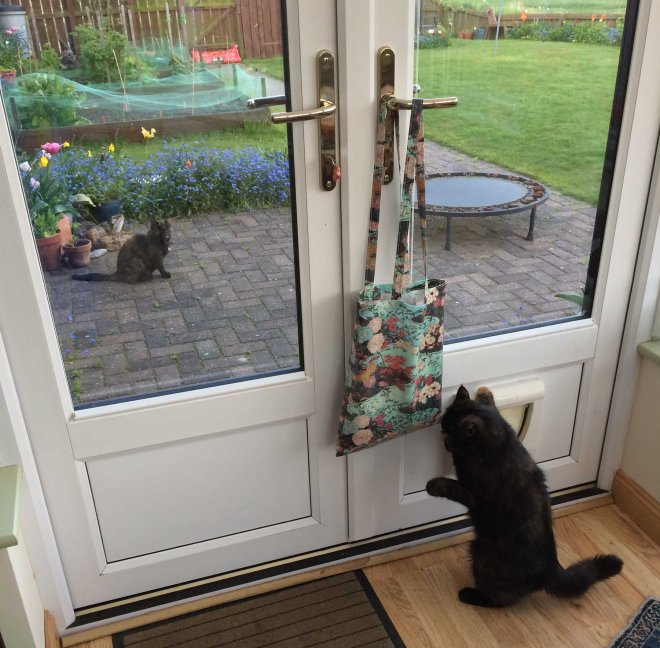 trying to work out the cat flap
