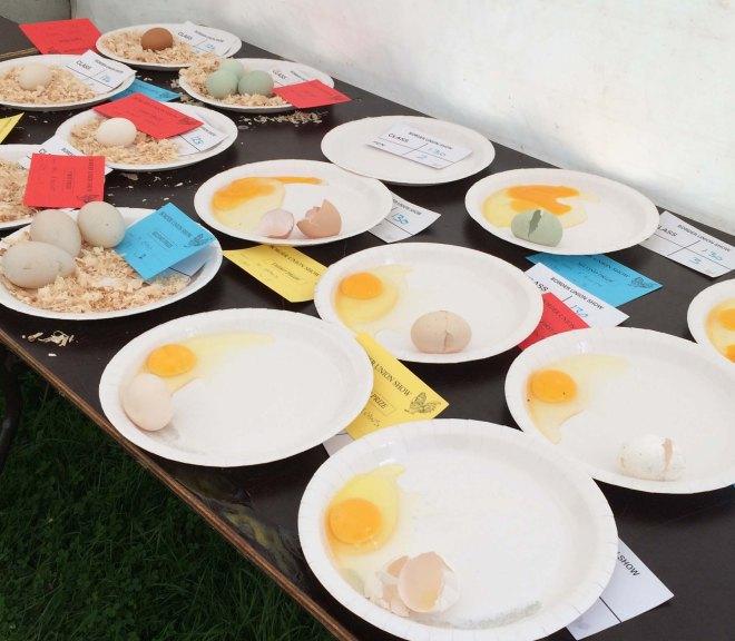 judging eggs