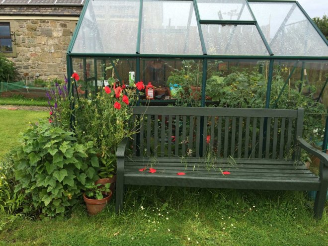 greenhouse bench and poppies