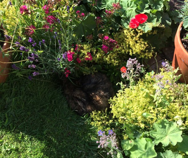 Poe asleep in flowerbed