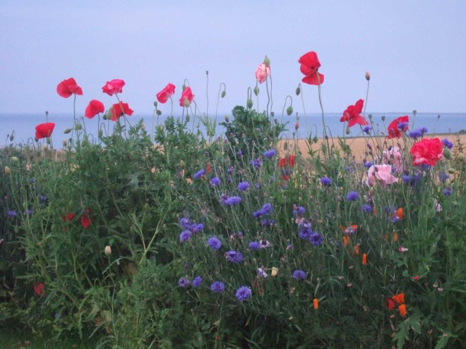 riotous explosion of poppy colour
