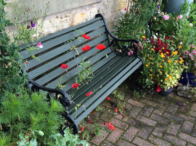 rogue poppies growing in bench