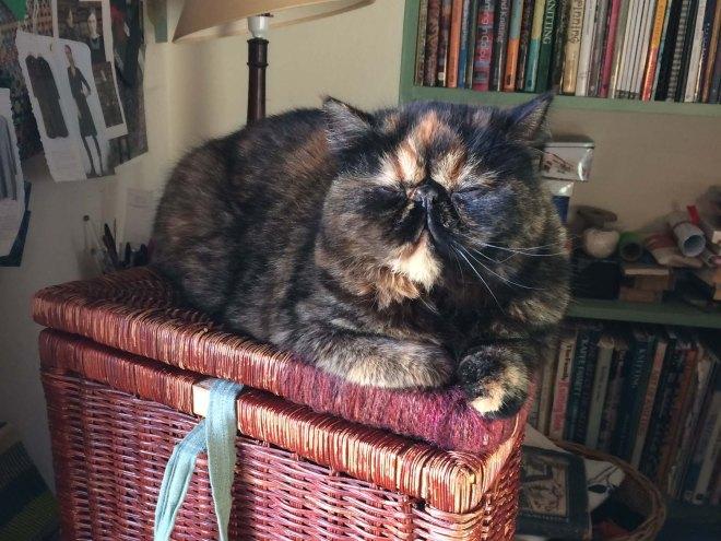 ilsa-loves-the-laundry-basket