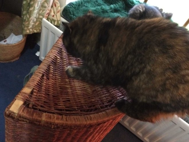 naughty-ilsa-destroying-laundry-basket