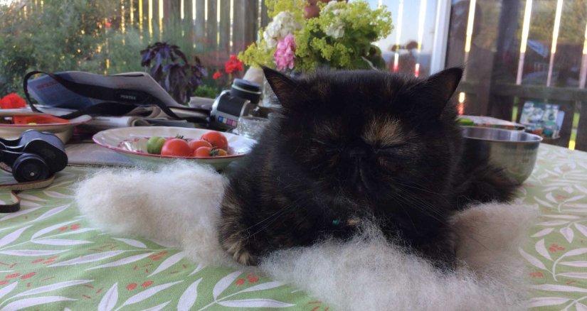 Spinning a cat hair comforter…