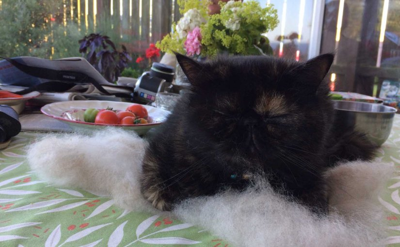 Spinning a cat hair comforter …